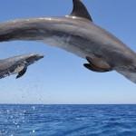 zatoka-delfinow