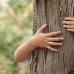 drzewa_lecznicze_2