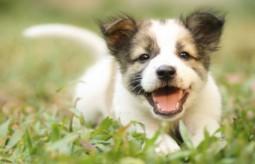 Jak zrobić domowe jedzenie dla psa – przepisy