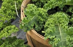 Jarmuż - działanie lecznicze, zastosowanie i uprawa