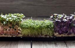 Kiełki – trzy proste sposoby na domową hodowlę