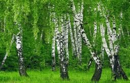 Jadalne drzewa